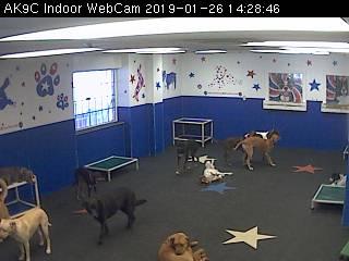 Doggie Daycare Indoor Webcam
