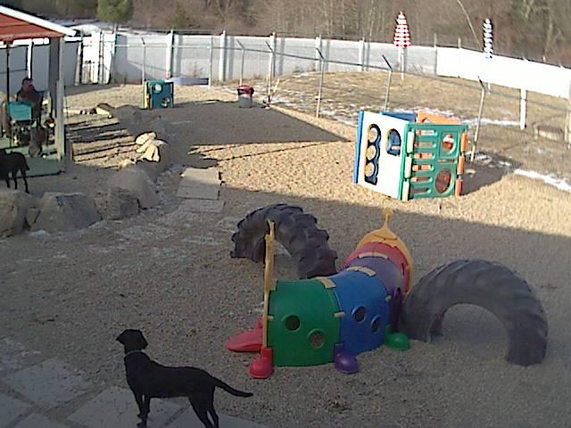 Doggie Daycare Outdoor Webcam