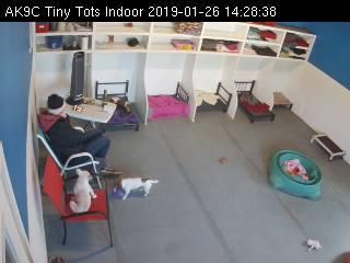 Doggie Daycare Tiny Tots Webcam